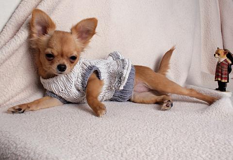 Одежда Для Собак Чихуахуа