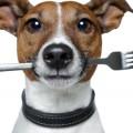 Чем кормить щенка той терьера
