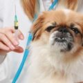 Прививки пекинесам