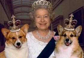 Фото записи Вельш корги королевы Елизаветы 2: история происхождения