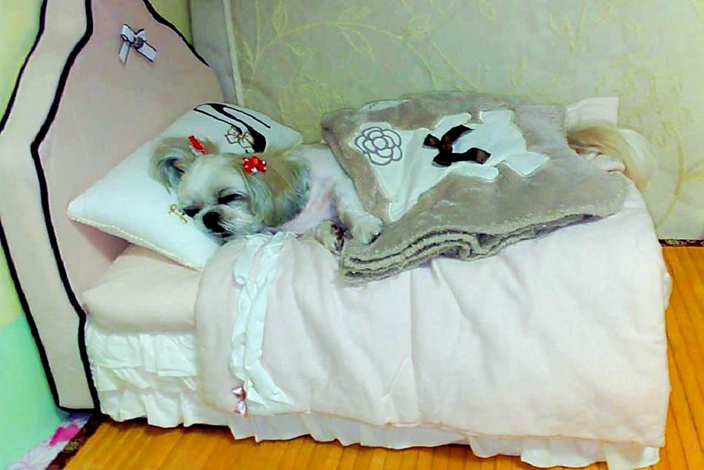 Болезни и лечение ши - тцу