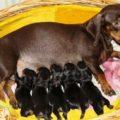 Такса беременность и роды