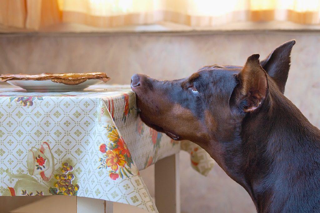 Чем кормить добермана