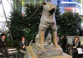 Фото записи Хатико порода собак акита ину