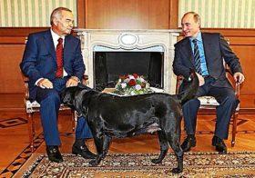 Лабрадор Владимира Путина