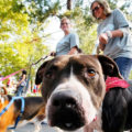 Законодательная Программа, курирующая владельцев собак.