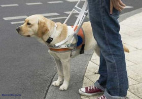 Фото записи Праздничная неделя собак-проводников