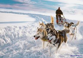 Фото записи Снежные просторы и сто десять собак