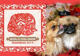 Фото записи World Dog Show 2019 / Шанхай (КНР)