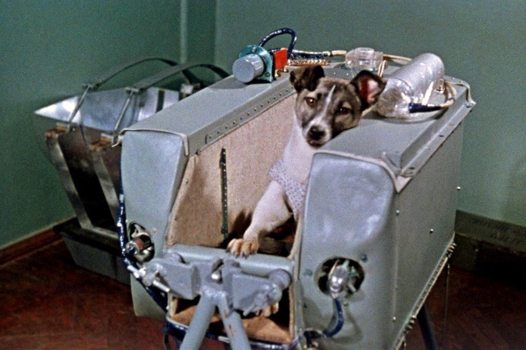 Лайка - собака космонавт