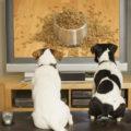 Телевизионная сеть DogTV
