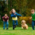 Забавы для собачек