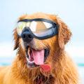 Солнцезащитные аксессуары для собак