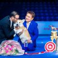 Лучшая собака Всемирной выставки 2019