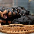 Предотвращение жестокости к животным