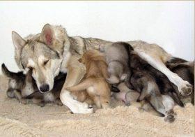 Фото записи Лайка беременность и роды