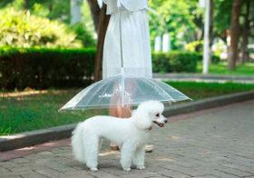 Фото записи Дождливые инновации