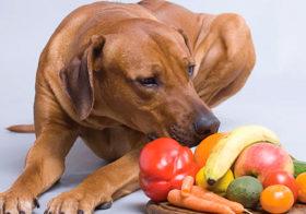 Фото записи Ветеринары меняют фруктовые правила
