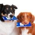 Ветеринарное страхование