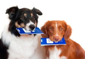 Фото записи Новости рынка страхования собак