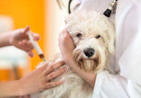 Фото записи Новости от ветеринаров эндокринологов