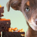 Шоколад для собак