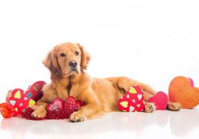 Фото записи National Dog Day