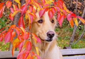 Фото записи Встречаем Осень!