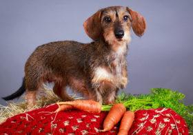 Фото записи Тюремный срок за вегетарианство