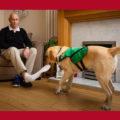 Собаки социальные работники