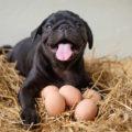 Новое в питании собак