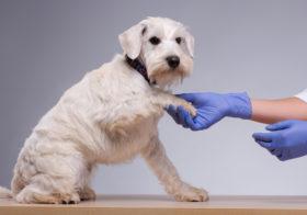 Фото записи Ветеринары оповещают