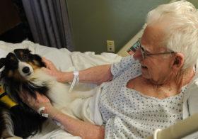 Фото записи Сердечные собаки