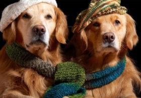 Фото записи Готовим собаку к зиме