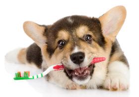 Фото записи Новости ветеринарных аптек