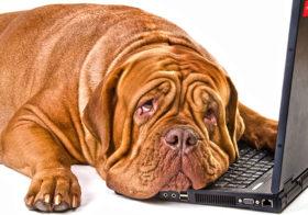 Фото записи Онлайн-платформа для владельцев собак