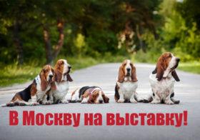 Завтра на праздник в Москву!