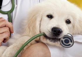 Фото записи Онкология у собак