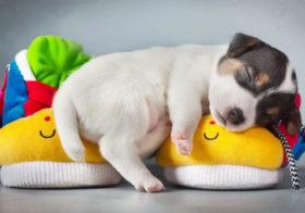 Фото записи Всемирный день домашних животных