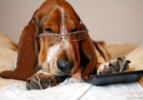 Фото записи Европейское развитие законопроекта о правах собак