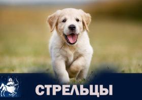 Фото записи Собаки Стрельцы