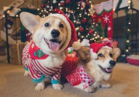 Фото записи Рождественские угощенья для собак