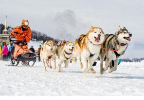 Фото записи Новогодние гонки на собачьих упряжках