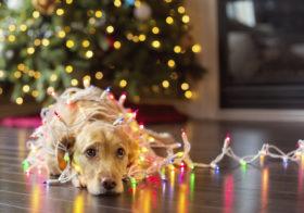 Фото записи Ветеринары неврологи о новогодних гирляндах