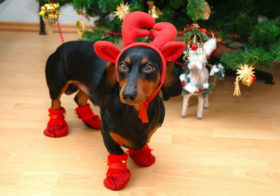 Фото записи Костюмированный рождественский бал