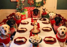 Фото записи Вечеринка для собак