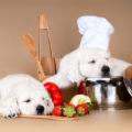 Витамины в питании собак.