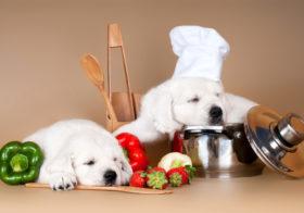 Фото записи Новости о витаминах для собак