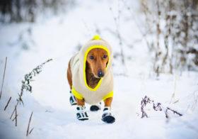 Фото записи Зимняя защита собачьих лап