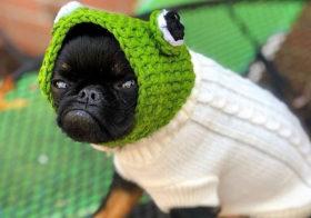 Фото записи Вечно недовольный пёсик
